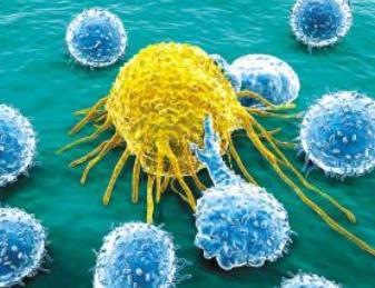 我们体内的淋巴细胞是干什么的