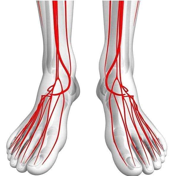 下肢动脉硬化的症状有哪些呢?